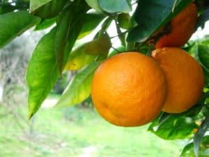 orange-1327676